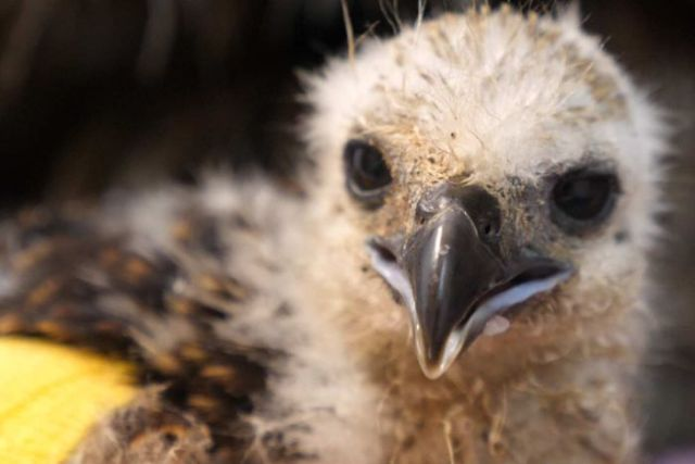 Close up view of a  chick's face