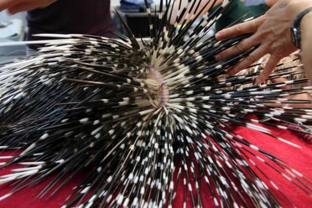 A close-up shot of the black and white spines of a porcupine.