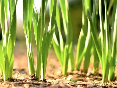 Semillas de césped natural: qué y cuándo plantar