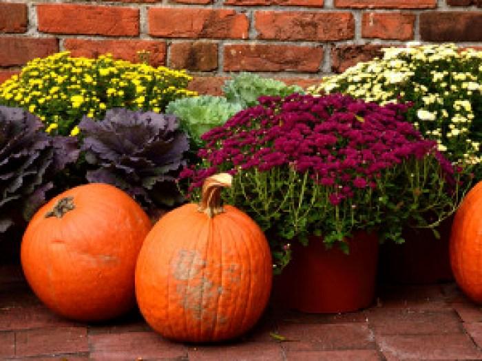 calabazas y flores en una terraza