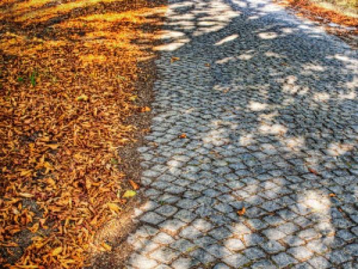 hojas secas para decorar el jardín en otoño