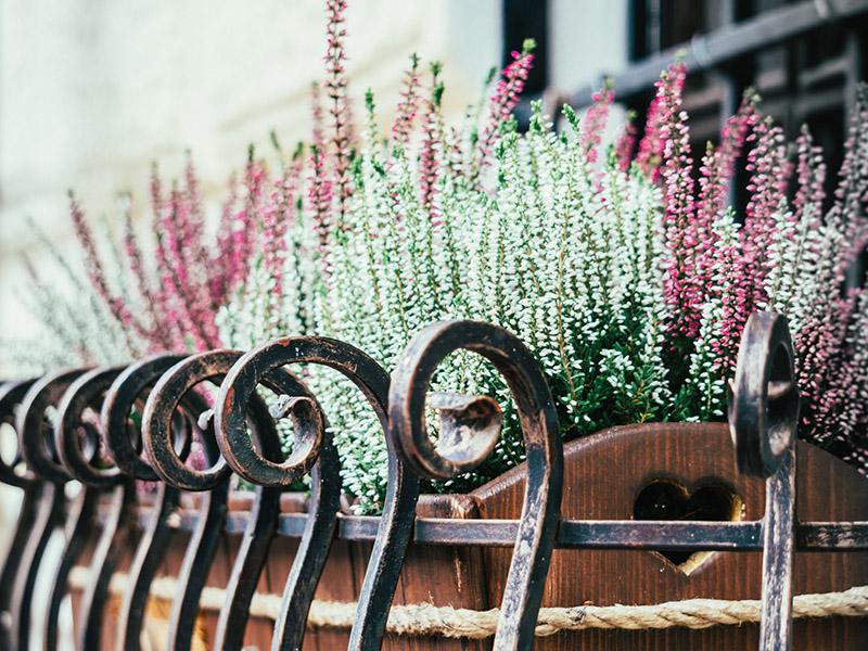 Plantas aromáticas en balcón