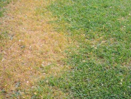 Prevenir plagas y enfermedades en jardín, huerto, césped y flores