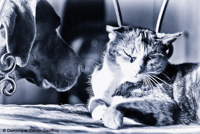 Premiere rencontre chien et chaton