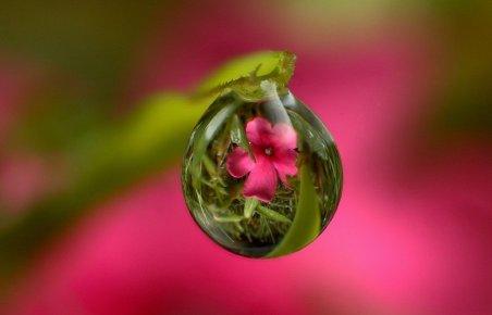 Flower dew drop 1