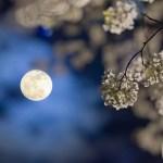 Moon-Garden
