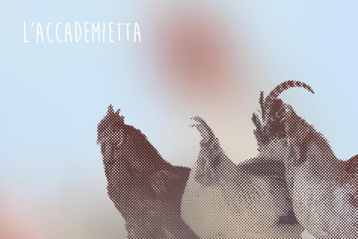 L'Accademietta, i polli e i pollastri