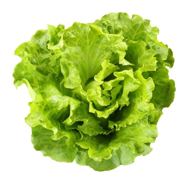 lettuce microscope experiment