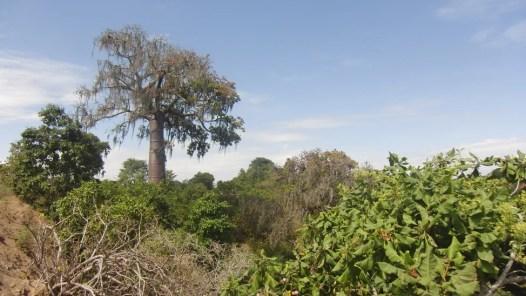 Fricciones Forestales y Conservacionistas