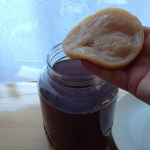 Kombucha and the scoby