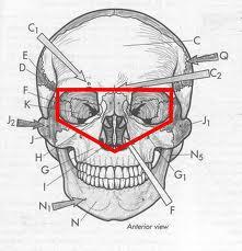 cranial-vault
