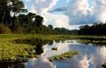 Reserva Nacional Pacaya Samiria. Foto: Thomas Müller/SPDA