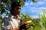 Agrobiodiversidad_ Sapuena
