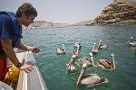 Reserva Nacional Paracas_Andina