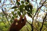 agrobiodiversidad_soberania_alimentaria_spda_iquitos-700x467