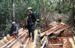 madera ilegal-sernanp