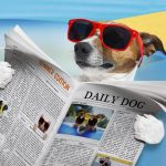 jack russell dog reading a newspaper or magazine, at the beach on summer vacation hiolidays, relaxing and resting