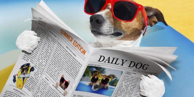 Los mejores vídeos de perros en la playa