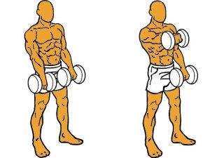Elevación Frontal, ejercicio de hombros