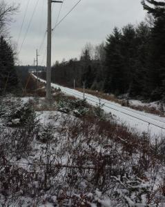 The Adirondack Rail Corridor in Ray Brook (Jack Drury Photo)