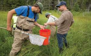 Scientist Spencer Bruce, right, collects brook trout for his statewide genetic study. Photo by Mike Lynch.
