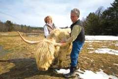 Cynthia and David Johnston raise Scottish Highland cattle at Dacy Meadow Farm.