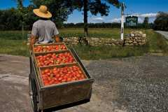 Essex Farm caters to customers who want locally grown vegetables.