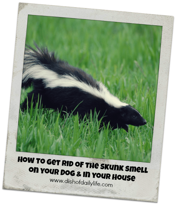 Get Rid of the Skunk Smell on Your Dog and in your House