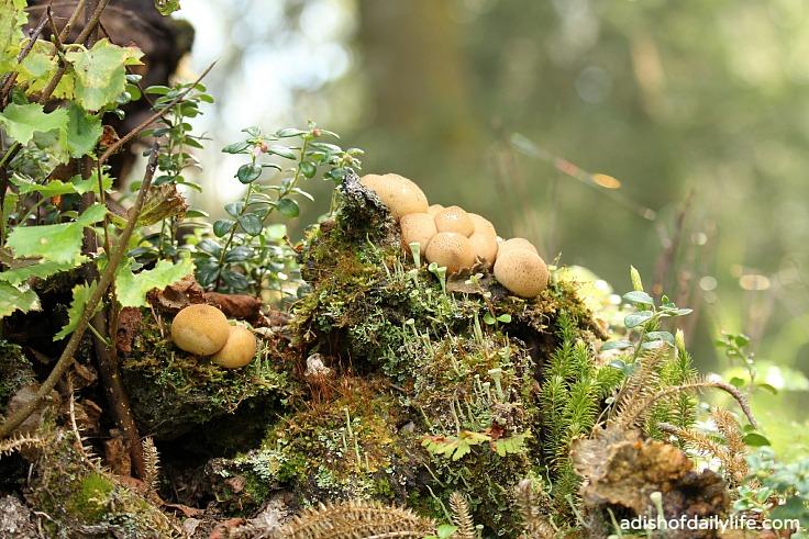 mushrooms at Kincaid Park