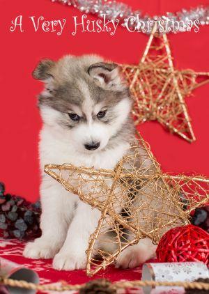 Husky-Christmas-Card-5.jpg