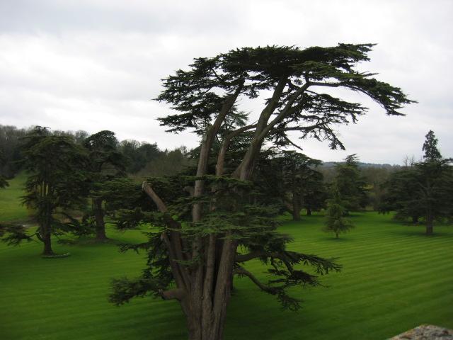Wilton Trees