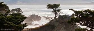 Cyprus California Coast