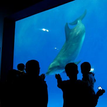 Hefei Aquarium