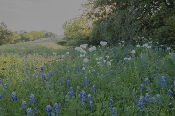 Enchanted Rock. Fredericksburg, Texas. @PennySadler 2015