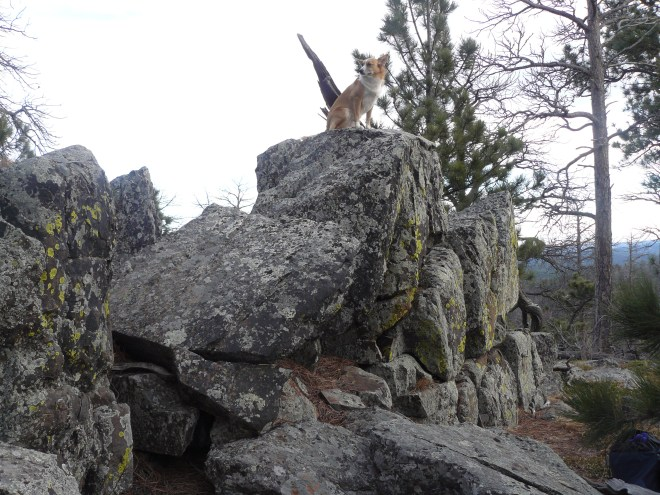 Lupe on Mount Warner, her third peakbagging success of the day! Lupe had been here before on prior Black Hills Expeditions. This was her 4th ascent of Mount Warner.