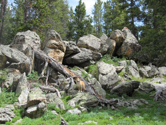 When Lupe found this pile of boulders N of Hwy 16, SPHP figured it must be the 20' high summit mentioned in Edward Earl's trip report. Photo looks NNE.