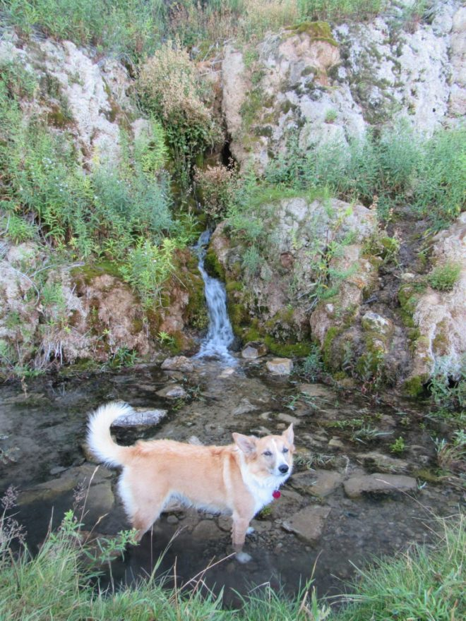 Lupe cools her paws off near the tiny waterfall created by Isaac Walton Spring at Al Buck Memorial Park along Hwy 89.