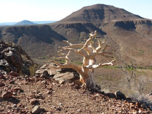 Namibia 11.13 2193