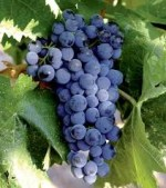 We Love these Ribera Del Duero Wines! A report on a SNOOTH Virtual Wine Tasting  @Snooth #wine #RiberaDelDuero #Spain