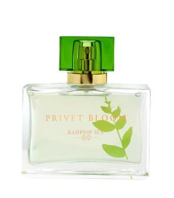 Hampton Sun Privet Bloom Fragrance