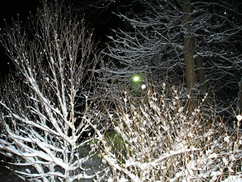 snow on branches caught with a flash.