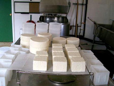 دراسة جدوى مشروع صناعة الجبن الابيض