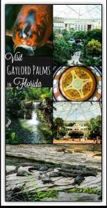 Visit Gaylord Palms in Florida