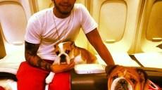Lewis-Hamilton-ses-deux-chiens-voyagent-en-premiere-classe-!_portrait_w674