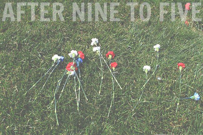 Roses in Arlington