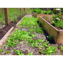 Small Crop Of Best Weed Killer For Lawns