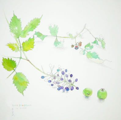 nature sketchbook - 秋のつぶて
