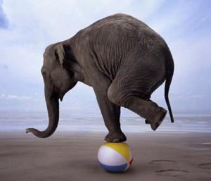 balancing-act-elephant1