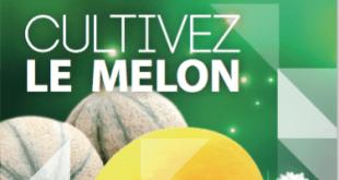elephant_vert_melon