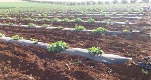 المهدي-حمزة-مزارع-فاس-مكناس